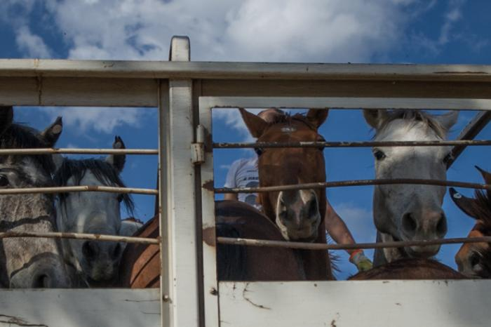 New investigation into the shocking origin of horse meat in Belgian supermarkets