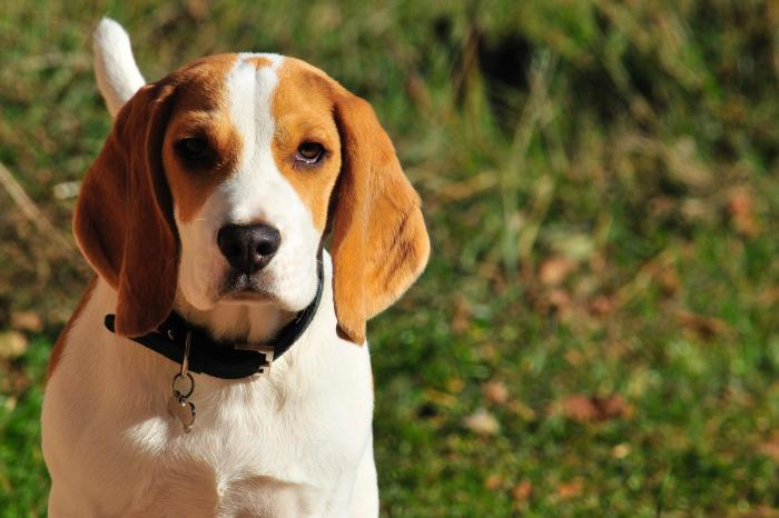 Brussels Government's decision to reduce animal experiments