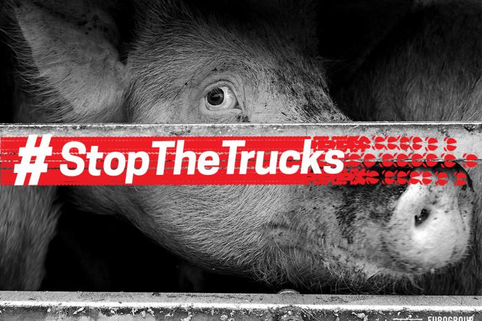 Animal welfare Ministers support GAIA's campaign against long-distance transport of animals