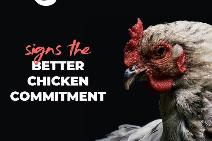 Continental Foods commits to combatting the worst practices of farming and slaughtering chickens