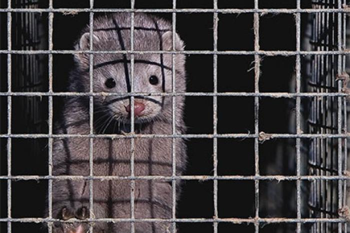 Walloon government bans fur farming