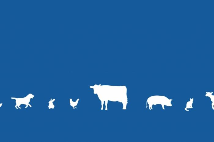 In honour of World Animal Day, GAIA calls for all animals to be protected by the Belgian Constitution