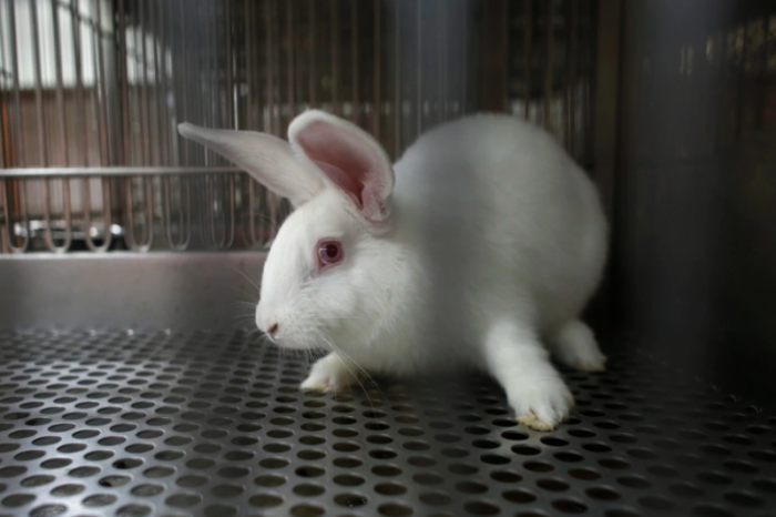 Number of animal tests in Flanders fell in 2019...