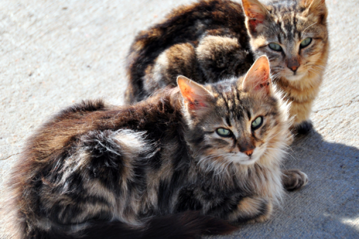 The sterilisation of cats will soon be compulsory in Wallonia and Brussels